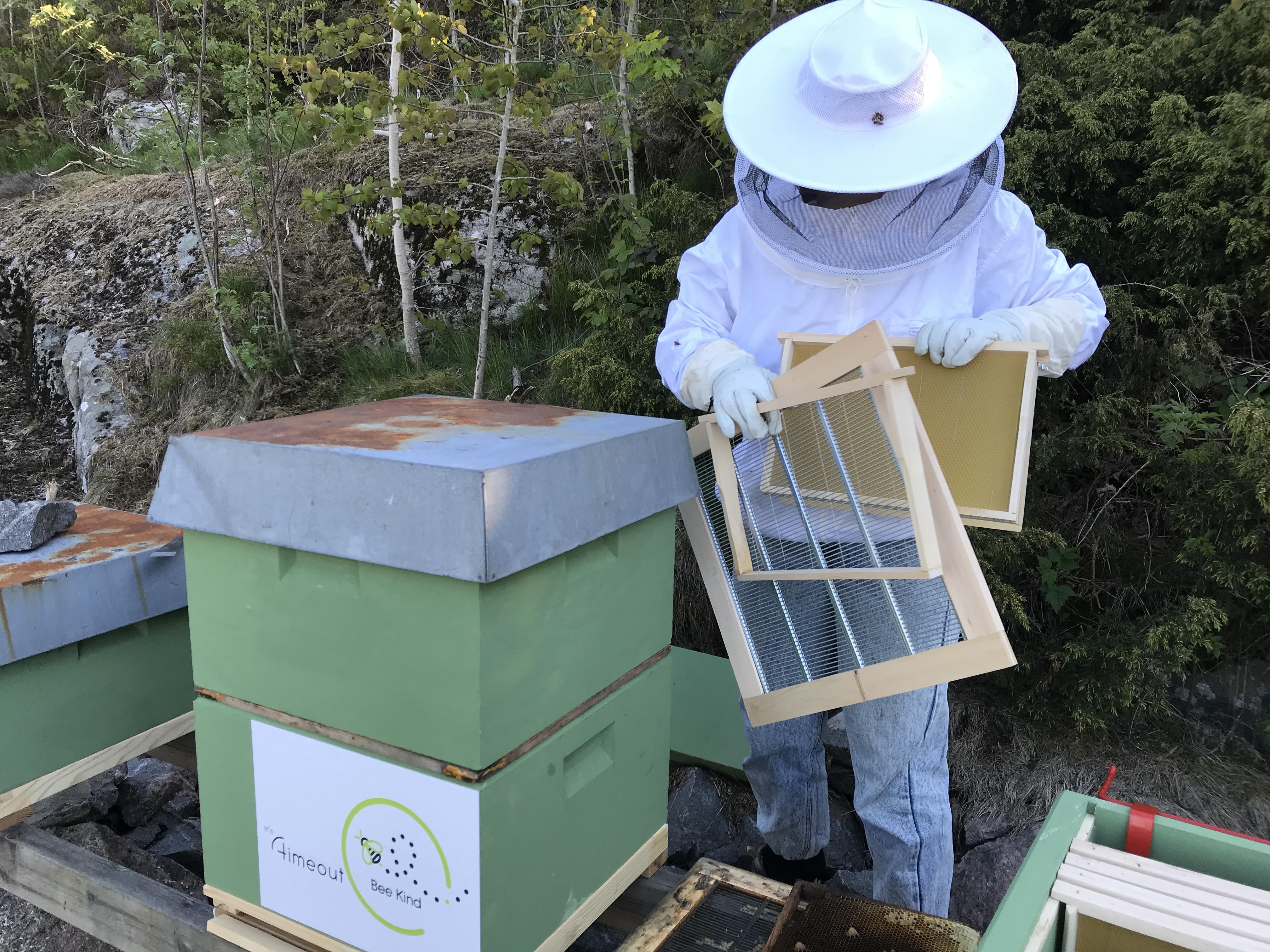 Birøkteren fikser i bikuben